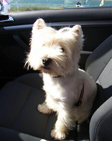 Bild  fido gpb Noch mehr Spanisch für Hundebesitzer