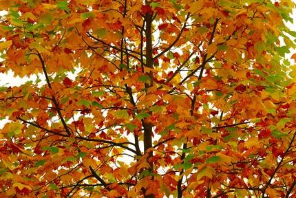 Bild  herbst Herbst richtig kitschig